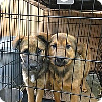 Adopt A Pet :: Jill ADOPTION PENDING - Danbury, CT