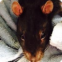 Adopt A Pet :: Bandant - Silver Lake, WI