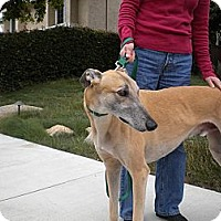 Adopt A Pet :: Simon - Carlsbad, CA