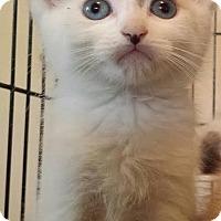 Adopt A Pet :: Luke - Irvine, CA