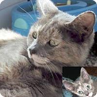 Adopt A Pet :: Ginger aka Cinnabar - Davis, CA
