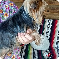 Adopt A Pet :: sampson - Crump, TN