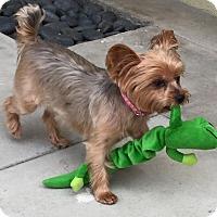 Adopt A Pet :: Naala - Los Angeles, CA