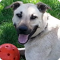 Adopt A Pet :: Bailey - Active Girl! - Bend, OR