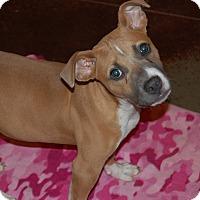 Adopt A Pet :: DELILAH - EDEN PRAIRIE, MN