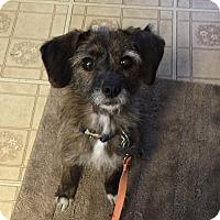 Adopt A Pet :: Gertie - Carey, OH