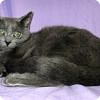 Adopt A Pet :: Katanya - Powell, OH