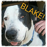 Adopt A Pet :: Blake (Courtesy Post) - Scottsdale, AZ