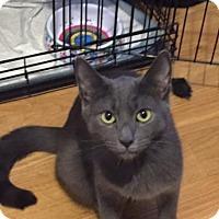Adopt A Pet :: Steeley - Lindenhurst, NY