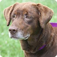 Adopt A Pet :: Murphy Brown and Cillia - Midlothian, VA