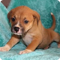 Adopt A Pet :: Carson - Chester Springs, PA