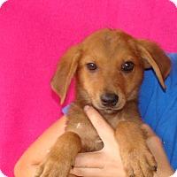 Adopt A Pet :: Navar - Oviedo, FL