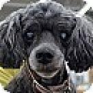 Adopt A Pet :: Bean