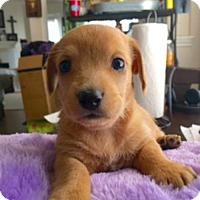 Adopt A Pet :: Conor Dwyer - Houston, TX