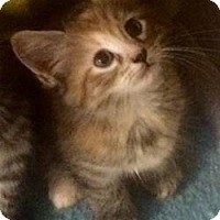 Adopt A Pet :: Guinevere - Gainesville, FL