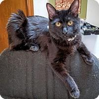Adopt A Pet :: Freya - Dallas, TX