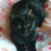 Adopt A Pet :: Nala - Rochester, MI
