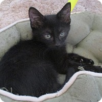 Adopt A Pet :: Cafe Au Lait - New Smyrna Beach, FL