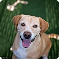 Adopt A Pet :: Mick - San Diego, CA
