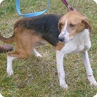 Adopt A Pet :: Jasper, D10 - Mineral, VA