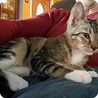 Adopt A Pet :: Josh - Tampa, FL