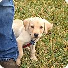 Adopt A Pet :: Baby Carter