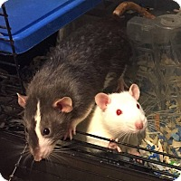 Adopt A Pet :: ROADSIDE ZOO BOYS (2) - Philadelphia, PA