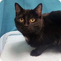 Adopt A Pet :: Molly - Colorado Springs, CO