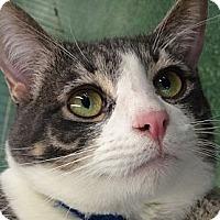 Adopt A Pet :: Gary - Winchester, CA