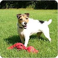 Adopt A Pet :: Sadie Jay - Mocksville, NC