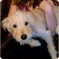 Adopt A Pet :: Mia - Pembroke pInes, FL
