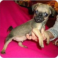 Adopt A Pet :: Hagen - Allentown, PA