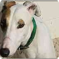 Adopt A Pet :: Clint - St Petersburg, FL
