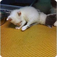 Adopt A Pet :: Patrick - Secaucus, NJ
