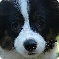 Adopt A Pet :: Darla - Afton, TN