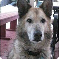 Adopt A Pet :: Jack - Evans, CO