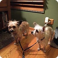 Adopt A Pet :: Addison & Grace - Chicago, IL