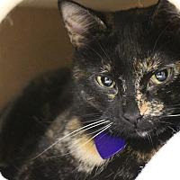 Adopt A Pet :: Binx - Byron Center, MI