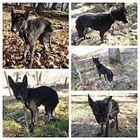 Adopt A Pet :: Tilla - Louisville, KY