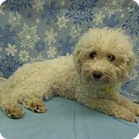 Adopt A Pet :: Roxanne - Mukwonago, WI