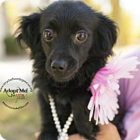 Adopt A Pet :: MAGGIE - Inland Empire, CA