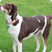 Adopt A Pet :: Blossom - Aurora, IL