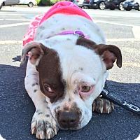 Adopt A Pet :: Carrie - Atlanta, GA