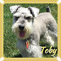 Adopt A Pet :: Toby~~ADOPTION PENDING - Sharonville, OH