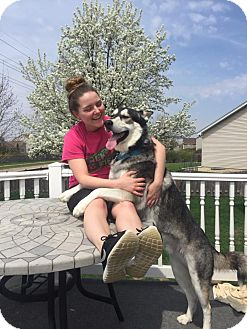 Alaskan Malamute Mix Dog for adoption in Crystal Lake, Illinois - Mel