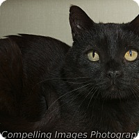 Adopt A Pet :: Cypress - Fort Collins, CO