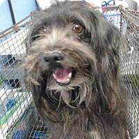 Adopt A Pet :: A496151 - San Bernardino, CA
