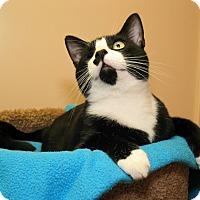 Adopt A Pet :: Larry - Milford, MA