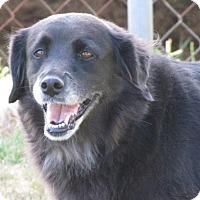 Adopt A Pet :: Oreo - Fairmont, WV