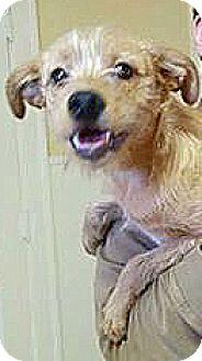 Terrier (Unknown Type, Small) Mix Dog for adoption in Harrisonburg, Virginia - Free Bird